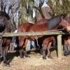 2008-01-27_photo_008.jpg