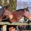 2008-01-27_photo_009.jpg