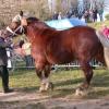 2008-01-27_photo_011.jpg