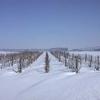 neige-033.jpg