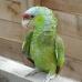 perroquet_1.jpg