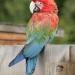 perroquet_2.jpg