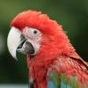 perroquet_3.jpg