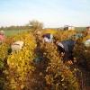 2008-10-11_003.jpg